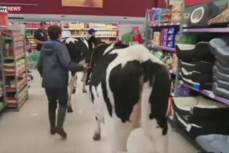 Doua vaci au ajuns intr-un hipermarket din Marea Britanie. Explicatia din spatele unui gest extrem