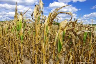 Prognoza ANM pentru perioada iulie-septembrie: canicula si seceta in majoritatea zonelor. Prognoza detaliata pe luni
