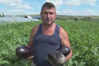 Coltul din Romania unde campurile sunt verzi si recoltele uriase, in ciuda secetei. Profitul scos de agricultori