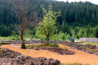 Dezastru ecologic in Bucovina. Peste un milion de litri de substante toxice au ajuns in apa unui rau