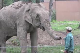 Sarbatoare la ZOO din Targu Mures. Tania si Hella, rasfatati de Ziua Internationala a Elefantilor