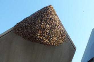 Un avion militar al Statelor Unite a fost inconjurat de un roi de peste 20.000 de albine: