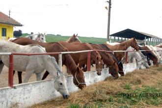 Caii, noua atractie a Litoralului romanesc. Temperatura de la care nu mai aveti voie sa va suiti in sa