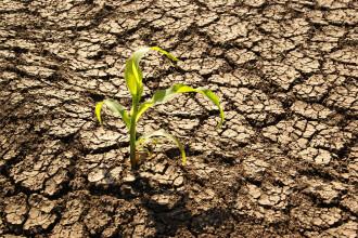 Cea mai grava seceta din ultimii 10 ani a facut paguba totala in recolta fermierilor din Romania: