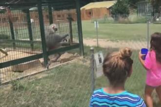 Reactia virala unui babuin de la Zoo atunci cand a fost enervat de copii.