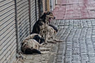 Caz terifiant in India. O femeie a fost ucisa de 100 de caini maidanezi, sub privirile fiului ei ingrozit