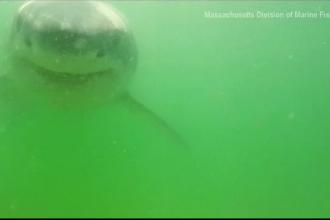 Un rechin a încercat să mănânce camera care îl filma