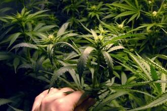Cine sunt oamenii care s-au îmbogățit, legal, din marijuana