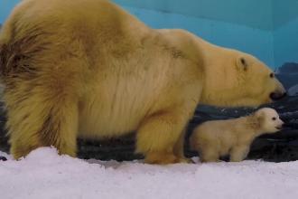 Miska, puiul de urs botezat în semn de omagiu pentru părinţii săi