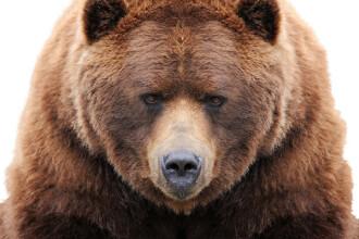 Un bărbat s-a luptat cu mâinile goale cu o ursoaică. Cum arată acum. FOTO