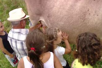 """Fermele unde turiștii îngrijesc animale și învață să facă brânză: """"Copiii nu văd asta la bloc"""""""
