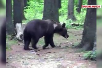 Cum au reacționat turiștii când au văzut un urs lângă lacul Sfânta Ana