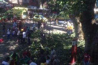 VIDEO. Momentul în care un copac a omorât 12 oameni la o sărbătoare, în Madeira