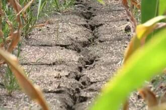 România, afectată grav de secetă. Cultivatorii din sudul țării sunt disperați