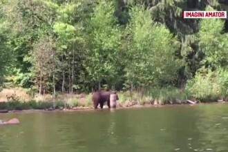 Turiști atacați de ursoaică. Imaginile filmate de un martor