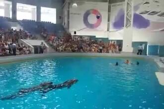 Scandal la Delfinariu. Trei activişti au sărit în apă, cerând eliberarea delfinilor