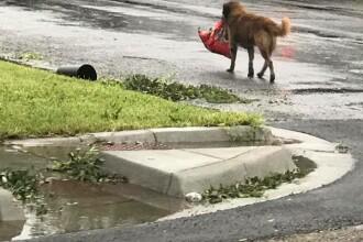 Cățelul considerat erou, după ce uraganul Harvey a lovit. FOTO