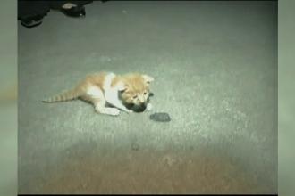 Pui de pisică, blocat în interiorul unei mașini, salvat în China