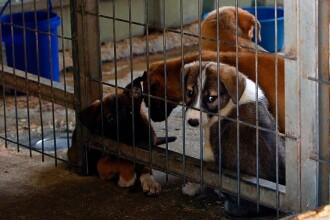 Caz fără precedent în Italia. O femeie obținut dreptul la concediu medical, ca să aibă grijă de câinele bolnav