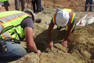 Oseminte de dinozaur, găsite întâmplător de mai mulți muncitori din Denver