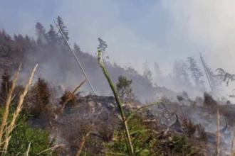 Plantație de conifere, din Bistrița, cuprinsă de flăcări