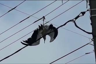 Operațiune de salvare a unui pui de barză prins între cablurile electrice. Alarma, dată de un copil