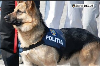 Un poliţist trebuie să plătească peste 10.000 de lei pentru moartea câinelui de serviciu