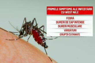 Anunțul Ministerului Sănătății despre virusul West Nile. 5 oameni au murit în București