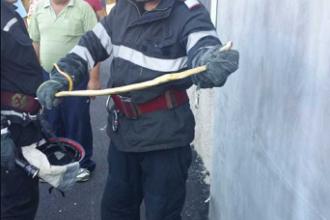 Un bărbat a sunat la Jandarmerie, după ce a găsit un șarpe sub capota mașinii