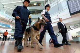 Cum va fi omagiat un câine polițist din Coreea de Sud, căzut la datorie