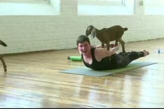 Yoga cu capre, la modă în SUA. Un nou studiu arată că animalele preferă oameni veseli