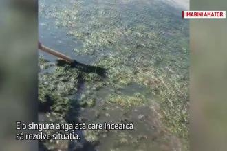 Turismul la Techirghiol, blocat în trecut. O turistă din SUA a curățat cu grebla algele din lac