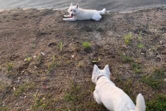 Un cuplu și-a pierdut cei 3 câini în nici 24 de ore, după ce au făcut baie într-un lac
