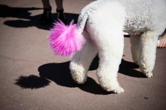 """O britanică și-a vopsit câinele în roz """"pentru a se potrivi personalității lui"""""""