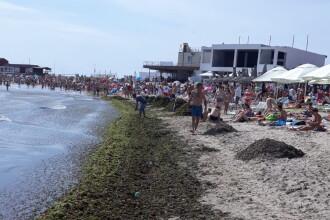 Cantități uriașe de alge au invadat plaja din Mangalia. Primăria a trimis un angajat