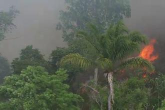 Incendiile fac ravagii în Amazon. Norul de fum se vede din spațiu. VIDEO