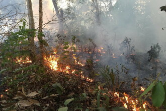 """Arde pădurea Amazonului. Președintele Franței vorbește despre o """"criză internațională"""""""