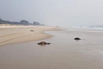 Motivul tulburător pentru care zeci de canguri au fost găsiți morți pe o plajă