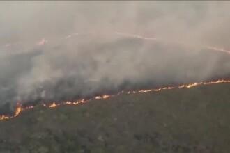 Pădurea Amazoniană arde. Proteste la ambasadele Braziliei din întreaga lume