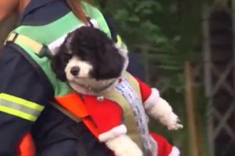 Femeia care își cară câinele în spate în fiecare zi la muncă. A devenit celebră. VIDEO