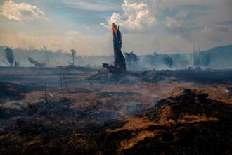 """""""Parcă e sfârșitul lumii"""". Biodiversitatea din Amazonia, distrusă definitiv de incendii"""