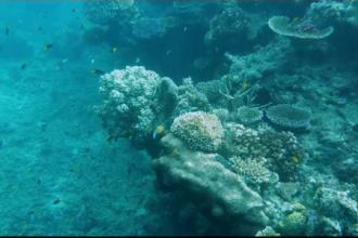 Marea Barieră de Corali, în pericol. Condiţiile de creştere a coralilor sunt foarte proaste