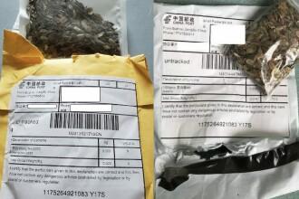 Misterul semințelor trimise din China americanilor a fost elucidat. Ce conțineau de fapt pachetele