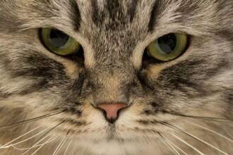 """Cum a reușit să supraviețuiască o pisică într-un container timp de 2 luni: """"Ne pierdusem orice speranță"""""""