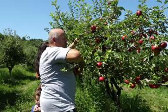 Fermierii riscă să rămână cu fructele neculese, pentru că nu găsesc zilieri