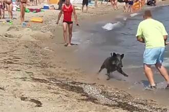 Musafir neașteptat pe o plajă din Germania. Oamenii au fugit îngroziți din apă