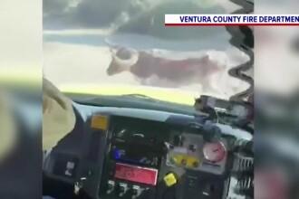 Obstacol inedit pentru o echipă de pompieri din California, în timp ce încercau să stingă un incendiu