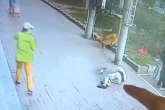 VIDEO. Un bărbat s-a prăbușit inconștient pe asfalt după ce o pisică i-a căzut în cap