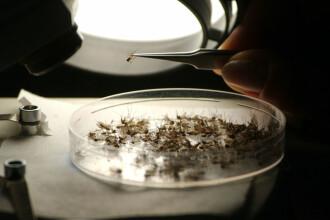 Virusul West Nile produce victime în Spania. 2 persoane au murit și alte 23 sunt spitalizate