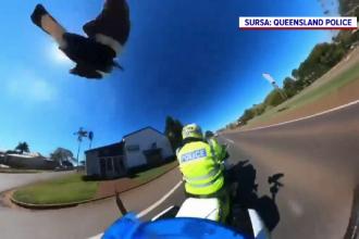 """Un polițist din Australia, victima unui """"infractor"""" neobișnuit. Ce l-a atacat în timp ce se afla pe motocicletă"""